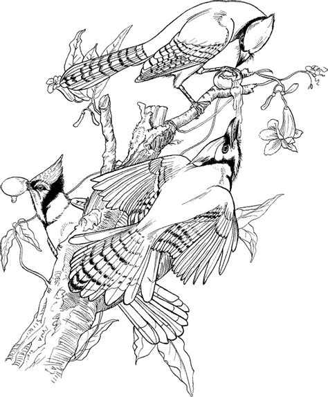 coloring pages of birds for adults 57 best images about kids coloring book on pinterest