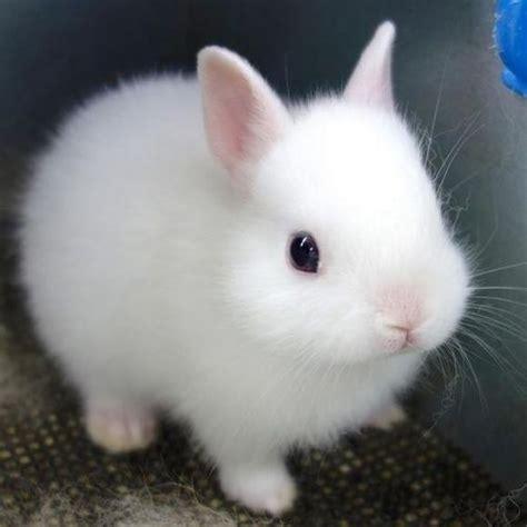 Bunny White white bunny cutest animals bunny animal