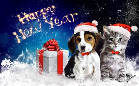 happy new year animals happy new year new year animals cat present