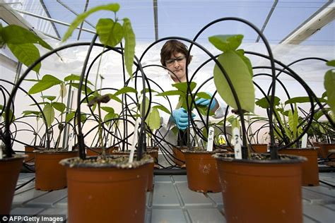 difficult plants to grow britain s chocolate greenhouse is saving the world s