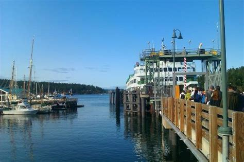 at friday harbor read literature creative writing and marine biology in friday