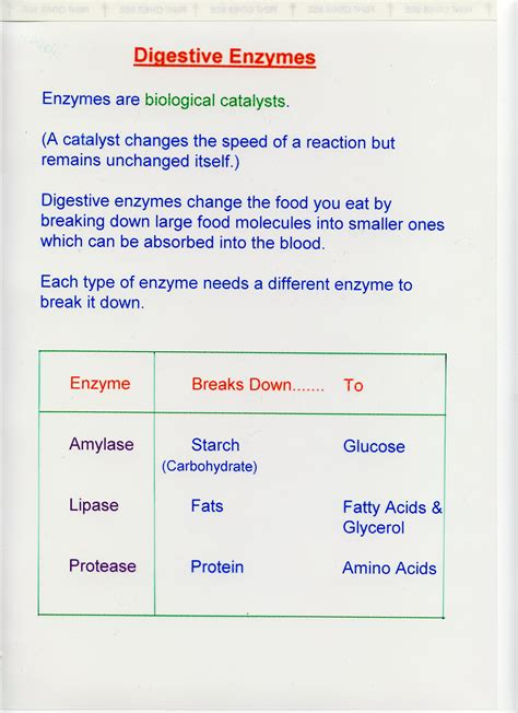 digestive enzymes digestive enzymes science digestive science products and information