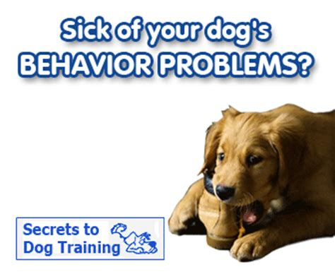 how to stop dogs messing outside my house dog potty training the basics of pooping control dog training