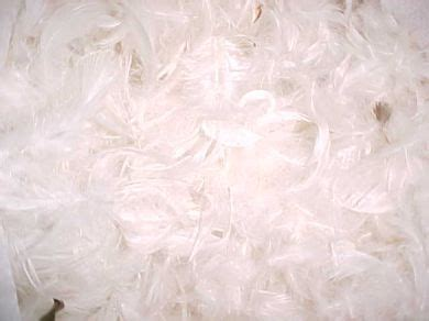 Feather And Pillow by Pillows Feather And
