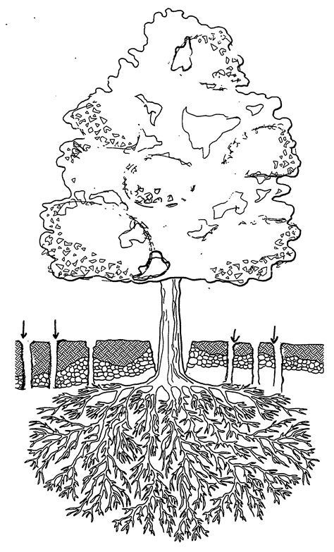 tree with roots line drawing sketch coloring page