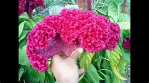 les plus belles fleurs artificielles les plus belles fleurs du monde momo