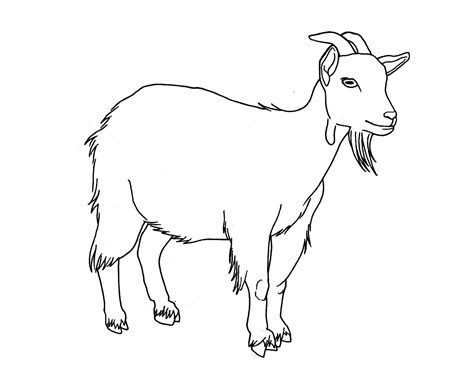 free draw goat pencil and in color goat