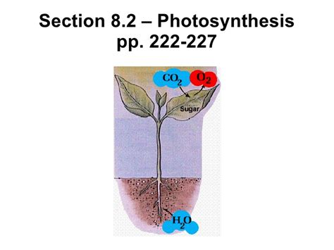 Chapter 8 Section 2 Photosynthesis by Chapter 8 2 Photosynthesis