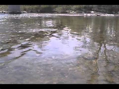 thames river youtube chinook salmon thames river london on youtube