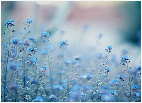 wallpaper flower tumblr blue dark quotes about flowers quotesgram
