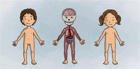 imagenes virtuales del cuerpo humano dentro del cuerpo humano contenidos educativos digitales