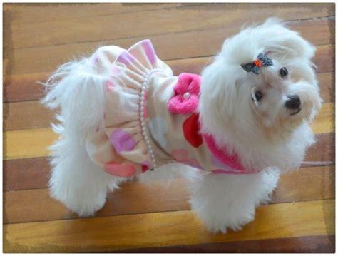 imagenes de cumpleaños bonitas y tiernas fotos de perritas tiernas archivos imagenes de cachorros