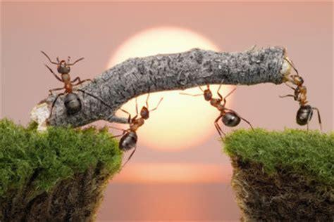 Wie Wird Ameisen Los 3756 by Ameisen Bek 228 Mpfen Hausmittel Richtig Anwenden