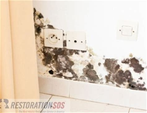will house insurance cover mold homeowners insurance water damage and mold coverage