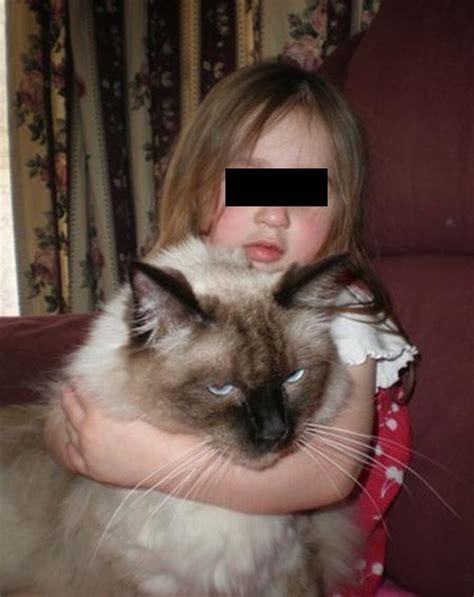 ragdoll 10kg ragdoll katze riesenkatzen die groessten hauskatzen der welt 1