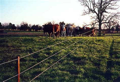 best electric fence electric fence pictures and ideas