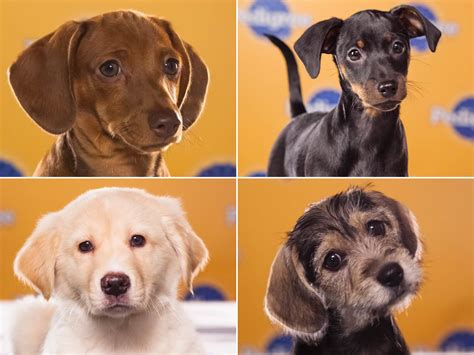 puppy bowl lineup place your bets meet the puppy bowl starting lineup today