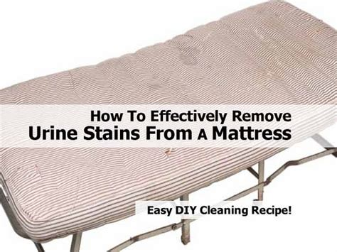 How To Clean Mattress Stains by How To Effectively Remove Urine Stains From A Mattress