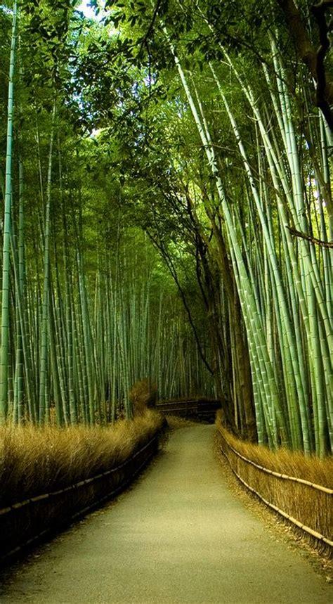 backyard bamboo garden 1000 ideas about bamboo garden on pinterest backyard privacy privacy fence screen