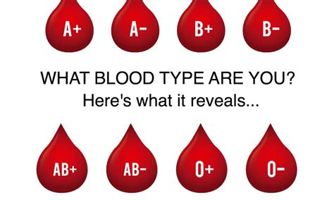 blood types what does your blood type reveal about your personality