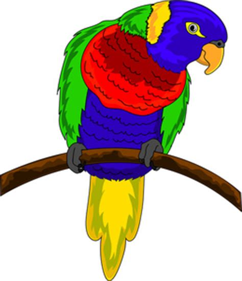 Colorful Bird Clipart colorful parrot clipart