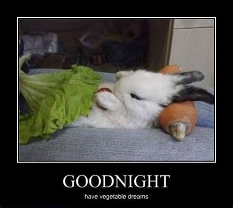 Funny Goodnight Memes - good night funny animal pictures