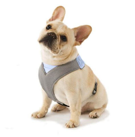 comfort dog harness comfort dog harness dog milk