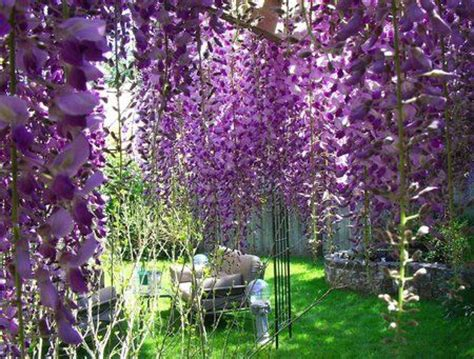 hanging purple flowers dream home pinterest