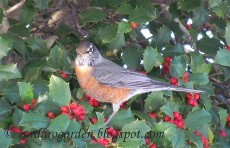 the gardener of eden birds in the bush or should i