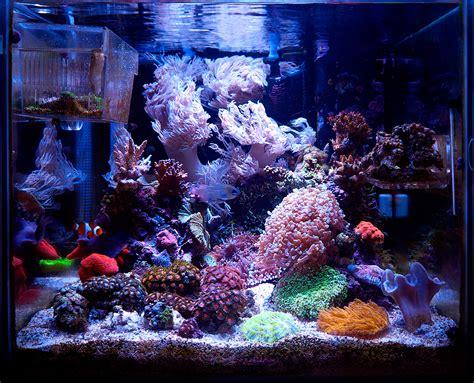 nano reef aquarium lighting rollajase 2014 featured nano reefs nano reef com community