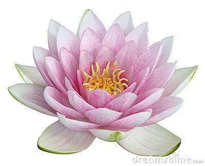 fiore di loto magic alfabeto floreale flower alphabet alphabet fleur