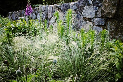 notes from the meadow user friendly deer resistant plant luxury deer resistant flowers