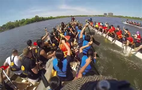 crash dragon boat race boatload of fun is stalled by odd crash rtm