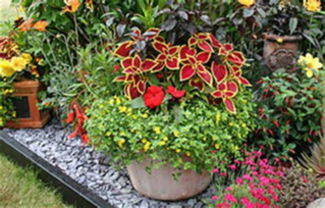 container gardening uk gardening gardening guides techniques plant up