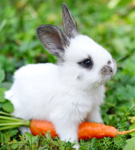 vegetables bunnies can eat can rabbits eat carrots daily or just as a special treat