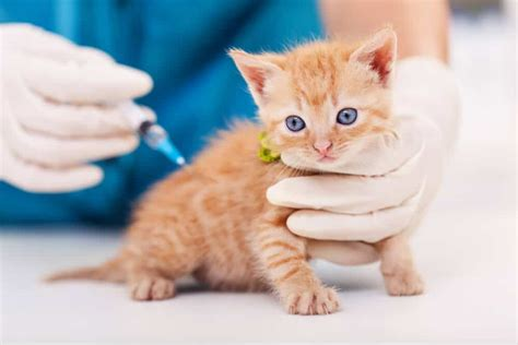 distemper vaccine  cats