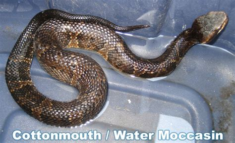 what does it get light out in pa how to get a snake out of a swimming pool