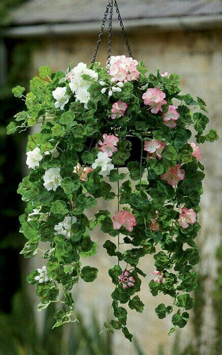 293 best hanging plants images on flowers