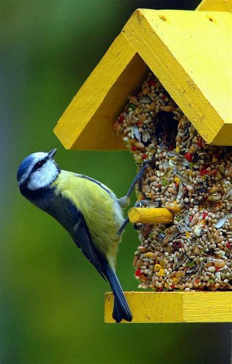 Oiseaux Metal Pour Jardin