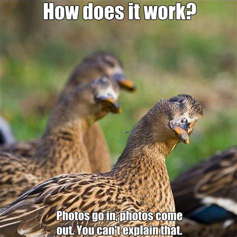 Meme Google Plus - google agora tem seu pr 243 prio editor de memes geek vox