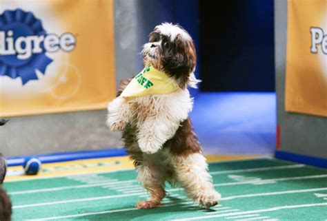 puppy bowl 2016 photos puppy bowl 2016 see players gallery tvline