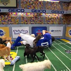 stephen colbert puppies stephen colbert puppies gif find on giphy