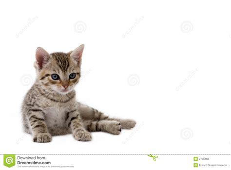 Striped kitten lying down stock photo. Image of furry