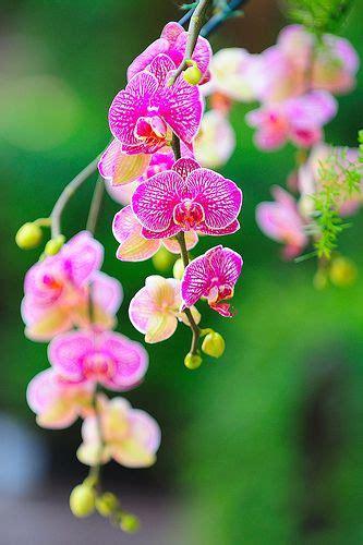 garden orchids and roses auf pinterest orchideen dfte 1065 besten flowers bilder auf pinterest blumengarten