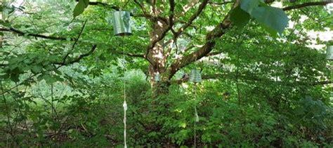 finkens garten finkens garten naturerlebnis in k 246 ln vita oeconomica