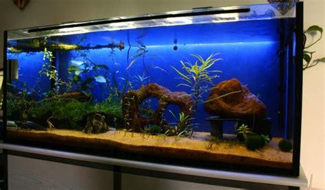welche beleuchtung aquarium bastelanleitung blau beleuchtete aquarienr 252 ckwand