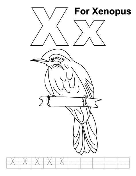 coloring pages for x x for xenopus coloring page with handwriting practice