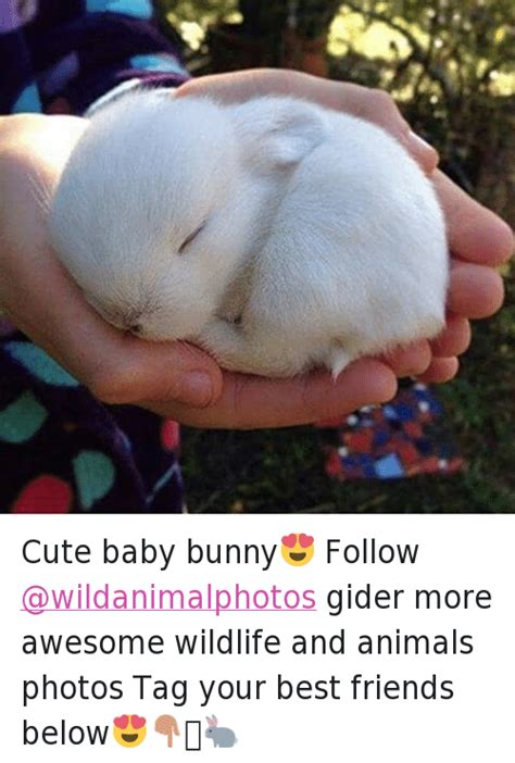 Baby Animal Memes - cute baby bunny follow gider more awesome wildlife and