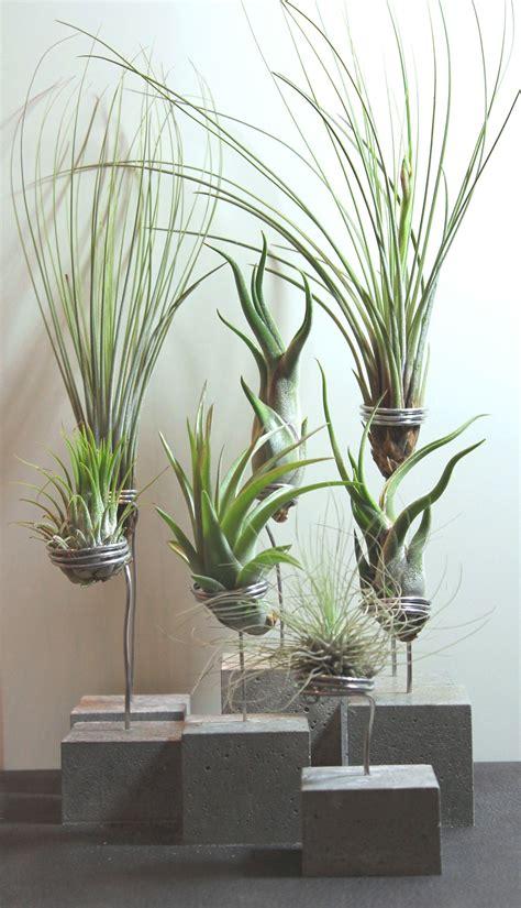 Pflanzen Bilder Selber Machen by Lebende Pflanzen Bilder Selber Machen Ostseesuche