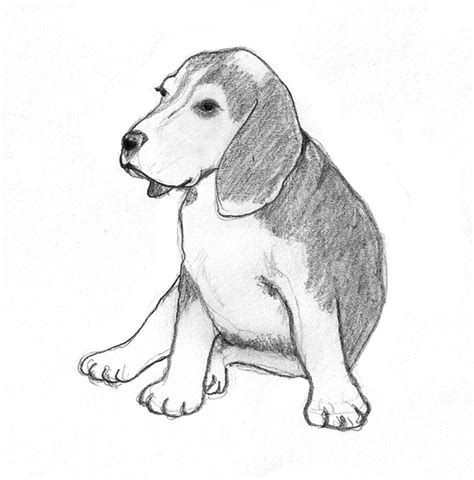 puppy sketches sketches pencil drawings of dogs
